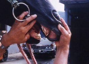 切端咬合の馬は食欲旺盛