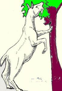 ヤギは、ブラウザー(葉食い)