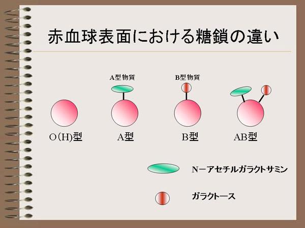 血液 型 ウィルス コロナ